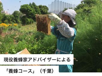「養蜂コース」(千葉)