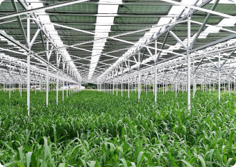 収益化モデル事業(農産物生産)