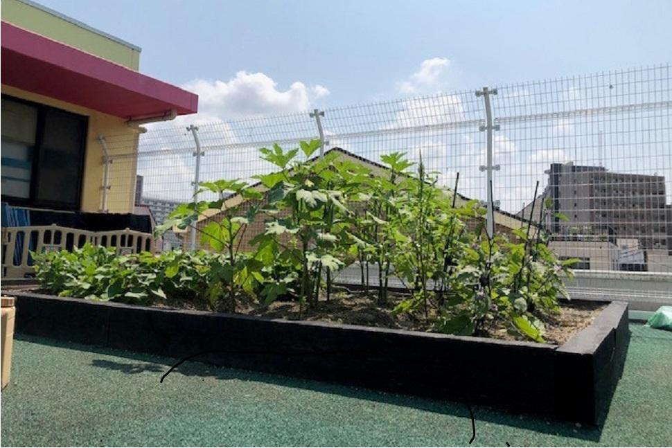 マイファームタイムス インタビュー|屋上菜園で園児たちに食育を!園長先生の熱い思い