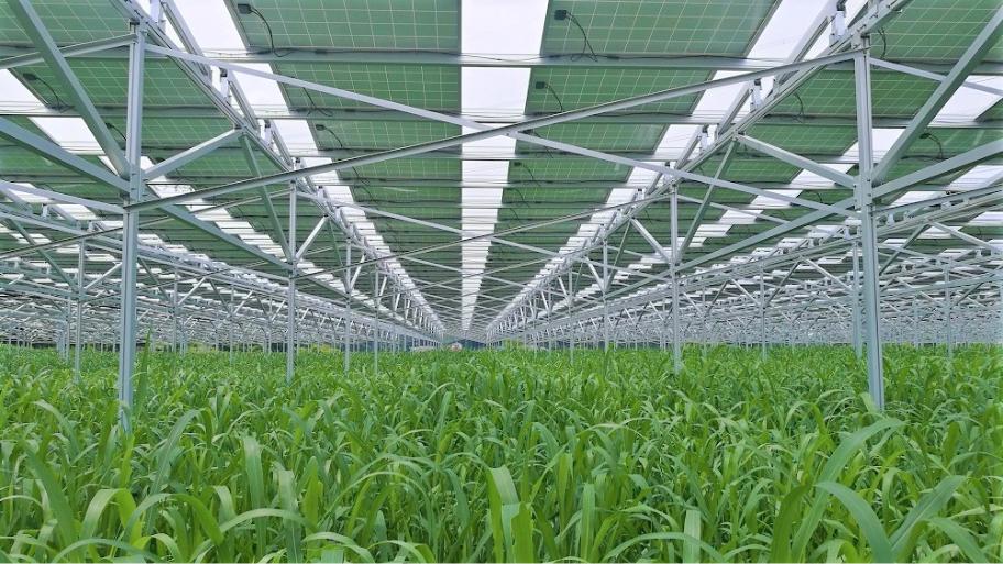 耕作放棄地における新しい営農モデル「生薬栽培/ソーラーシェアリング」